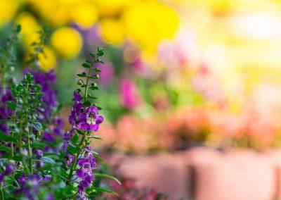 Gesprek in de tuin 2