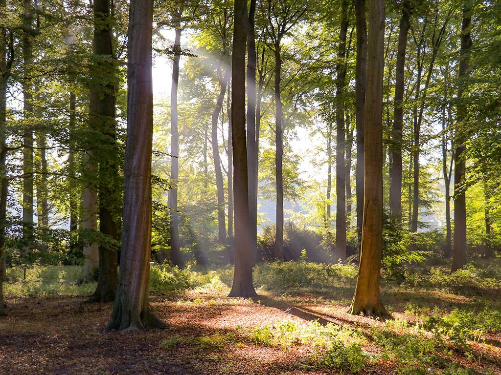 Natuurbeleving Mirjam De Boomklever